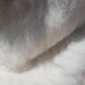 Alpakawolle kardiert