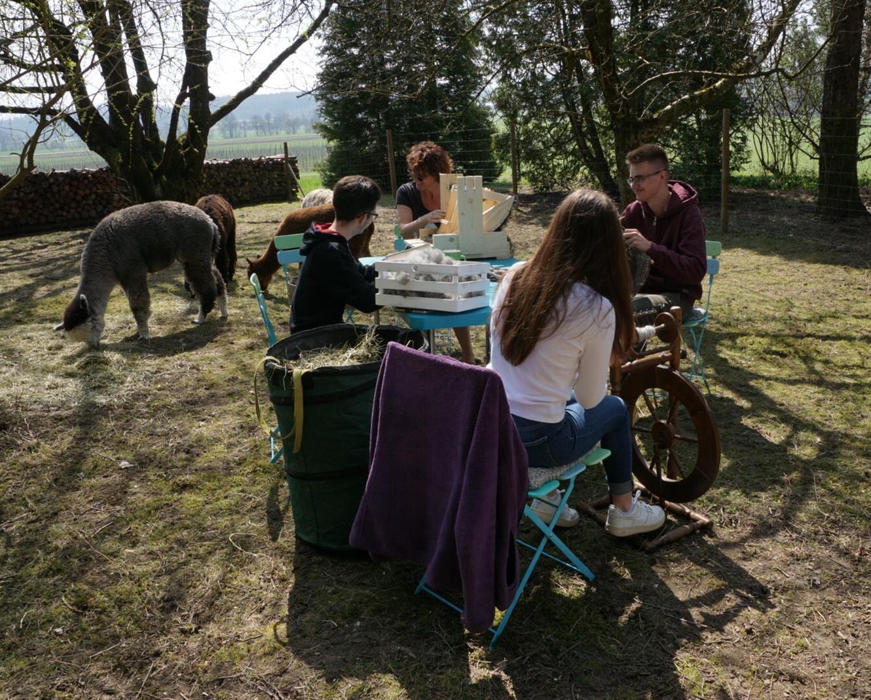 Alpakas mit Gästen