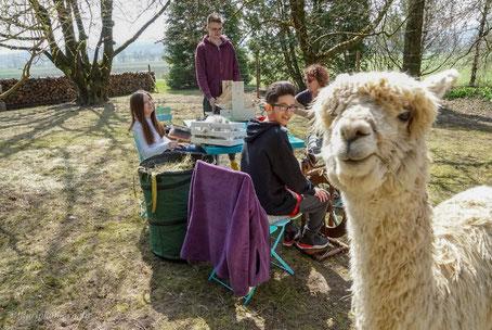 Alpaka Farm mit Gästen