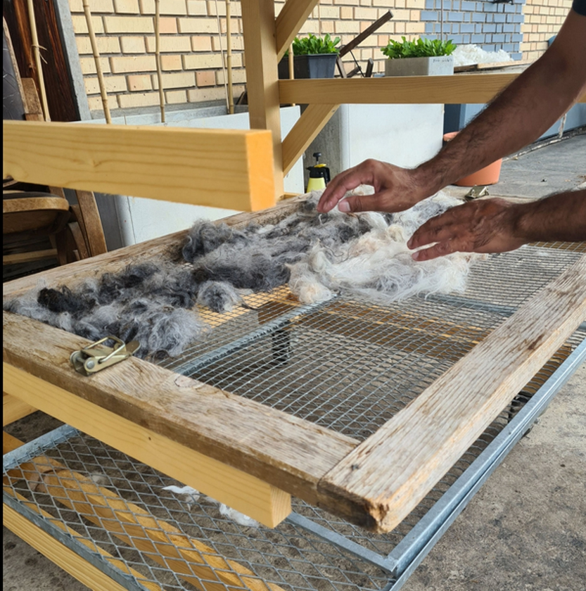 Alpakawolle wird zum Trocknen aufgelegt
